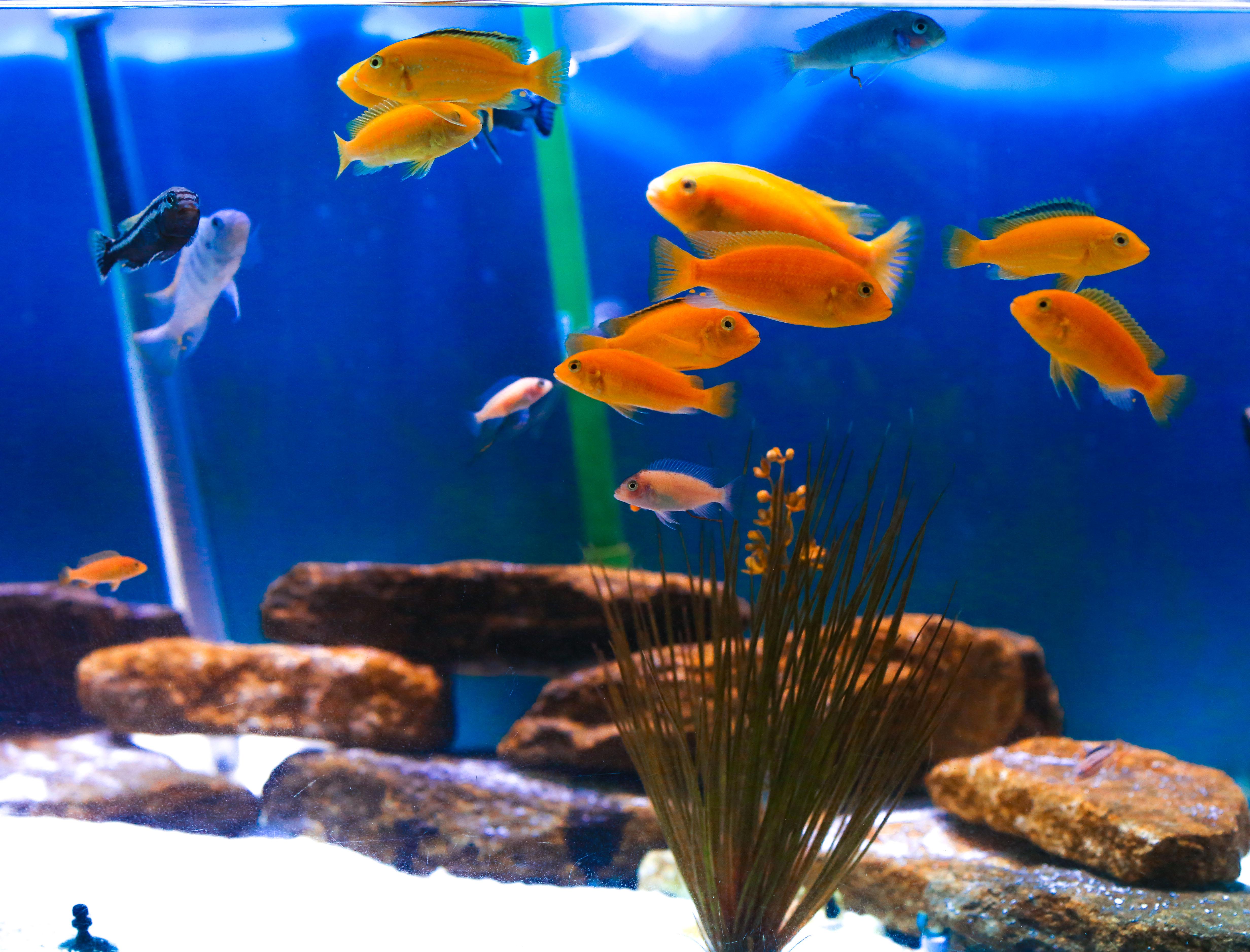 aquarium_0